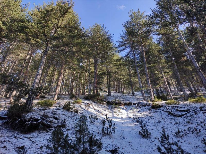 nattress sam four leaf clover review bulgaria for digital nomads
